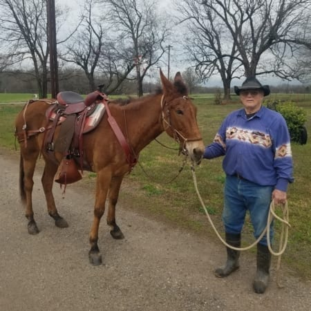 Mule wearing trail lite saddle pad