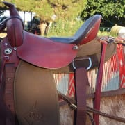 Saddle fitting for mules. Mule Training with Steve Edwards.