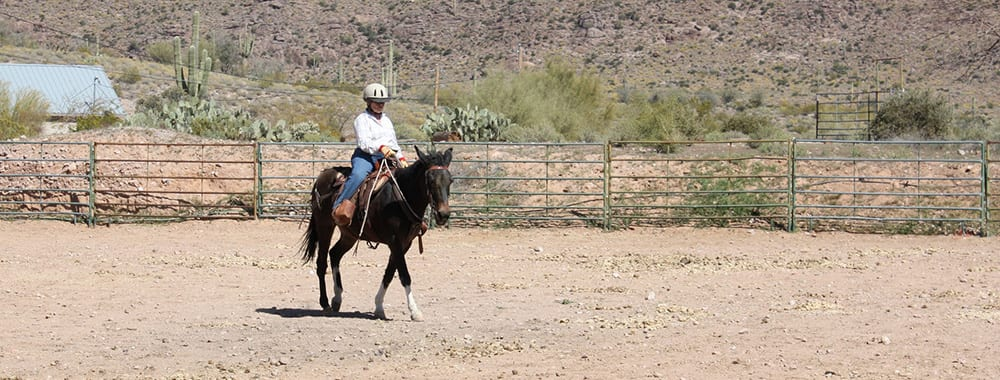 1d3e95edf8f Mules Can t Stand Prosperity — Feed and Nutrition - Queen Valley ...