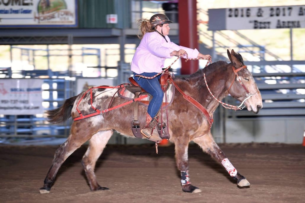 Flynn barrel racing with rider