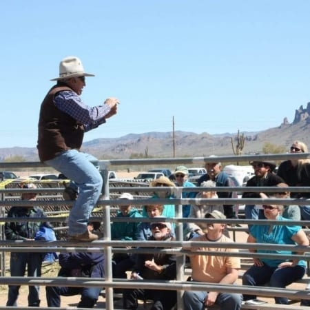 Steve Edwards at mule and donkey training clinic teaching
