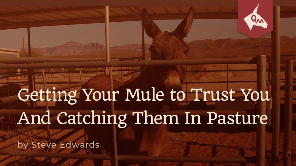 98fbd85b487 Getting Your Mule to Trust You And Catching Them In Pasture - Queen Valley  Mule Ranch