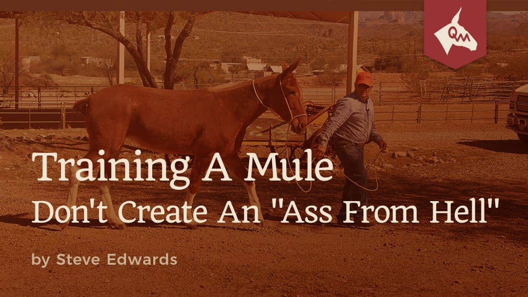 Articles Archives - Page 3 of 6 - Queen Valley Mule Ranch