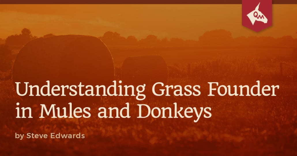 Grass Founder Article Featured Image
