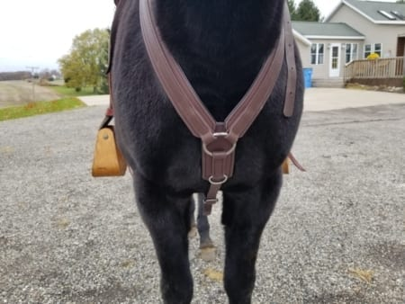 Mule wearing Steve Edwards Trail Lite Saddle-Picture of Breast Plate