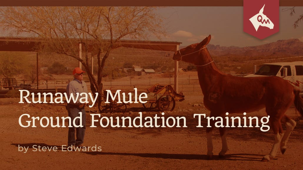Watching for signs of a runaway mule