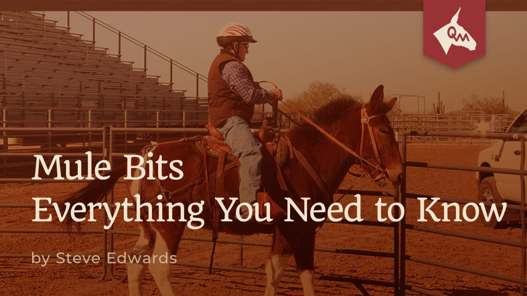 mule bits everything you need to know