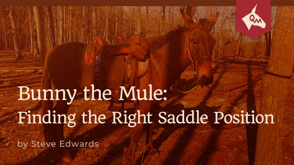 Bunny the Mule