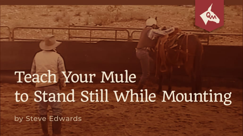 Teach Your Mule to Stand Still While Mouning