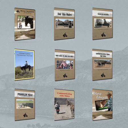 Mule and Donkey Gallery Mockup — DVD Covers